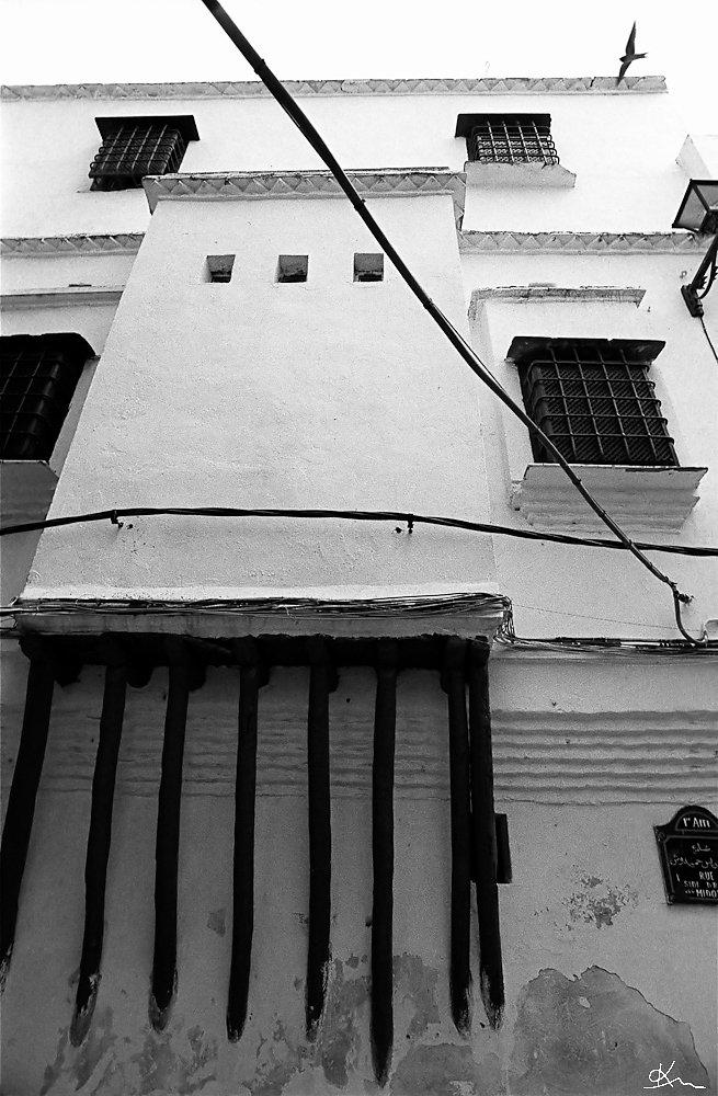 L'hirondelle de la Casbah - Alger 2008
