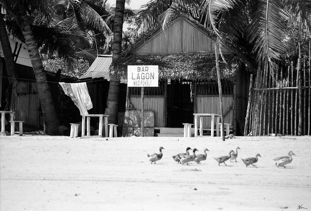 Canards à la plage - Alefa !! Ile de Nosy Be, Madagascar 1998